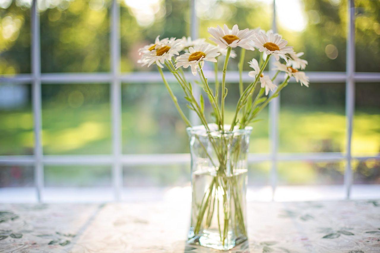 https://pavlinajirouskova.com/wp-content/uploads/2019/07/daisies-2485064_1920-1280x853.jpg