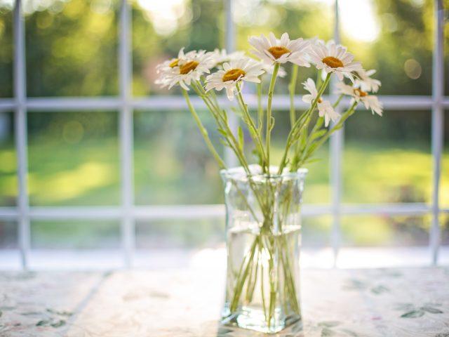 https://pavlinajirouskova.com/wp-content/uploads/2019/07/daisies-2485064_1920-640x480.jpg