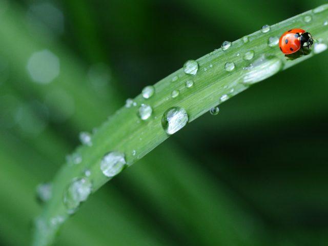 https://pavlinajirouskova.com/wp-content/uploads/2019/08/ladybug-574971_1920-e1566139819822-640x480.jpg